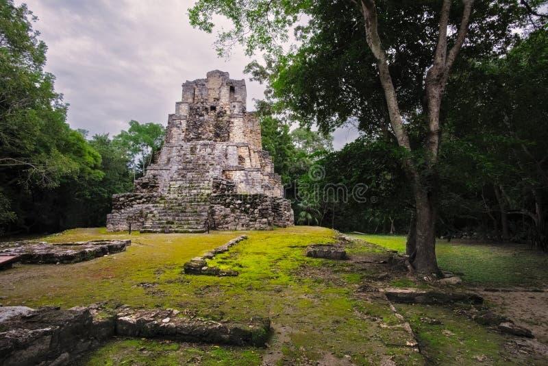 Gestalten Sie Ansicht des alten Mayatempels im Wald, Mexiko landschaftlich stockfotografie