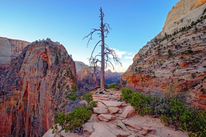 Gestalten Sie Ansicht von Zions-Sandsteinschluchten und von trockenem Baum, Utah, USA landschaftlich lizenzfreie stockbilder