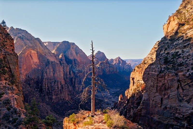 Gestalten Sie Ansicht von Zions-Tal mit trockenem Baumvordergrund, Utah landschaftlich lizenzfreies stockfoto