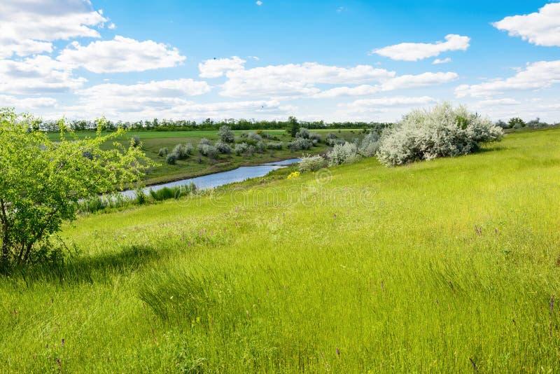Gestalten Sie grüne Wiese, Flussbank oder See, blauer Himmel und Wolken landschaftlich stockfoto