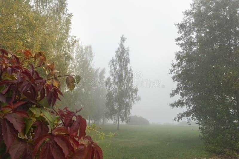 Gestalten Sie mit Bäumen, Fallfarbblättern und Nebel landschaftlich lizenzfreie stockbilder