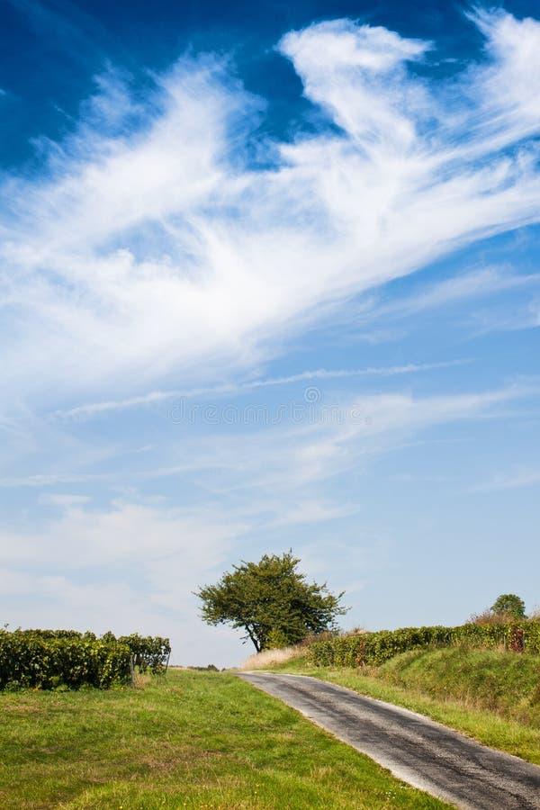 Gestalten Sie mit dem Himmel im Baum und in der alten Straße landschaftlich stockbild