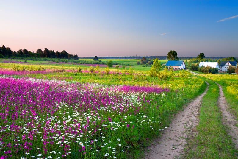 Gestalten Sie mit einer blühenden Wiese, der Straße und einem Bauernhof landschaftlich lizenzfreie stockfotografie
