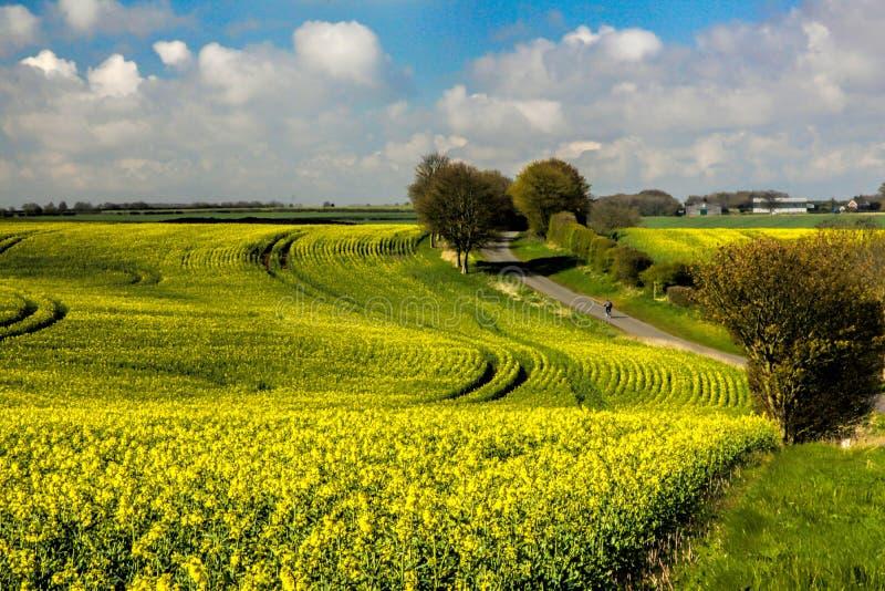 Gestalten Sie mit gelben Rapssamenblumen unter dem bewölkten Himmel landschaftlich lizenzfreies stockfoto