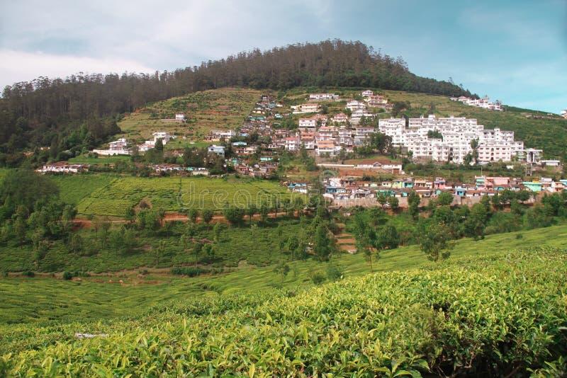 Gestalten Sie mit grünen Feldern des Tees in Ooty landschaftlich stockfotografie
