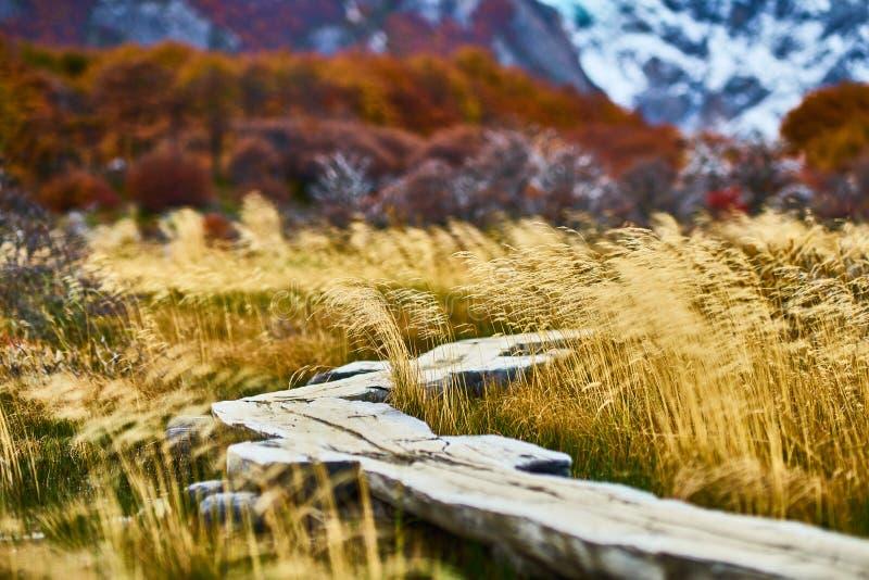Gestalten Sie mit Herbstbäumen, bewölktem Himmel und dem Schnee auf den Bergen im Nationalpark Nationalpark Los Glaciares landsch lizenzfreies stockfoto