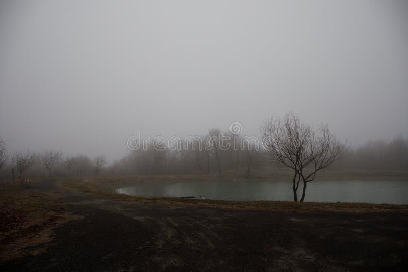 Gestalten Sie mit nebelhaftem Morgennebel in Forest Lake oder schönem Waldsee morgens zur Winterzeit landschaftlich Aserbaidschan stockfotografie