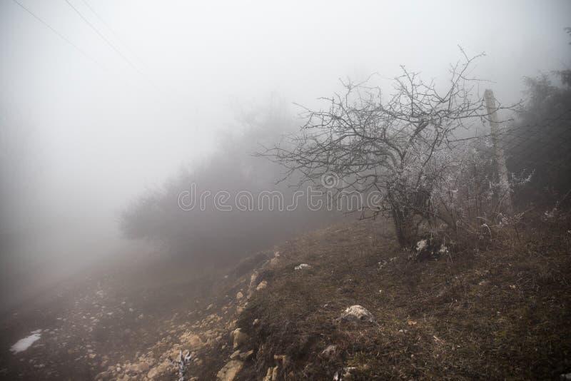 Gestalten Sie mit schönem Nebel im Wald auf Hügel landschaftlich oder schleppen Sie durch einen mysteriösen Winterwald mit Herbst lizenzfreies stockbild