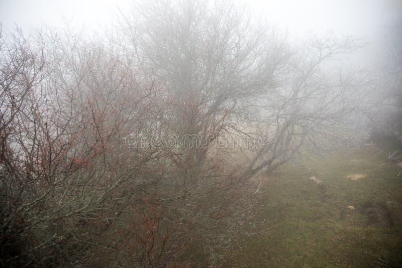Gestalten Sie mit schönem Nebel im Wald auf Hügel landschaftlich oder schleppen Sie durch einen mysteriösen Winterwald mit Herbst stockbilder