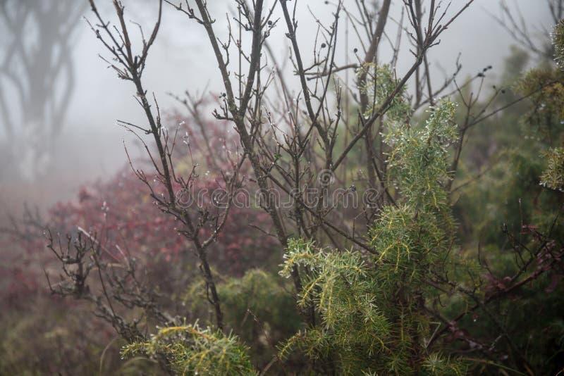 Gestalten Sie mit sch?nem Nebel im Wald auf H?gel landschaftlich oder schleppen Sie durch einen mysteri?sen Winterwald mit Herbst stockfotos