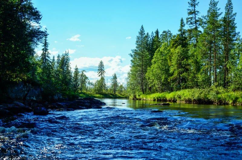 Gestalten Sie mit schnellem Fluss, grünem Wald der Kiefer und blauem Himmel landschaftlich stockfoto