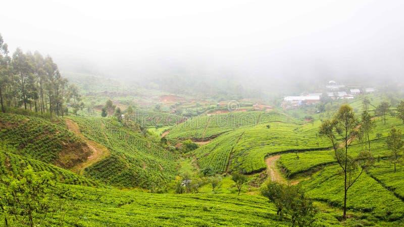Gestalten Sie mit Teeplantage nahe Ella in Sri Lanka landschaftlich lizenzfreie stockfotografie