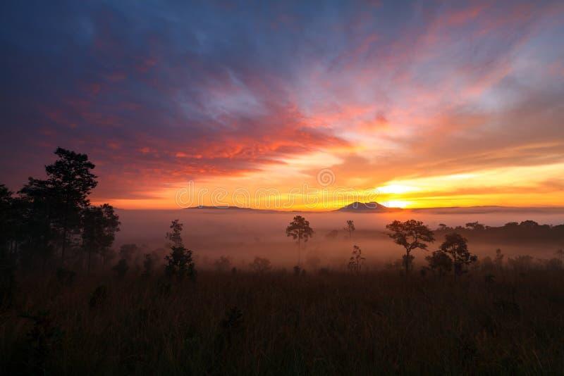 Gestalten Sie Morgensonnenaufgang an Nationalpark pH Thung Salang Luang landschaftlich lizenzfreies stockfoto