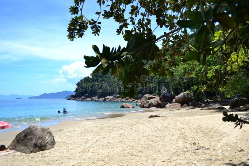Gestalten Sie Strand und Bäume an einem sonnigen Tag landschaftlich stockfotografie
