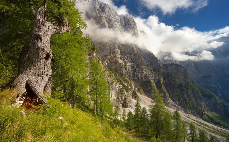 Gestalten Sie unter Moistrovka-Spitze, Nationalpark Triglav, Slowenien landschaftlich lizenzfreies stockbild