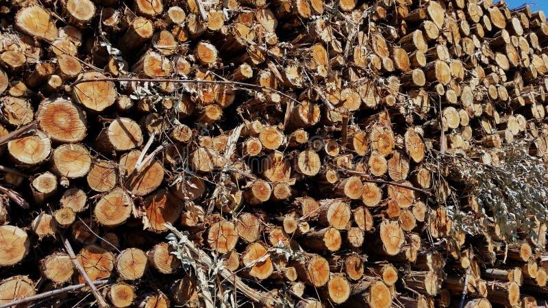 Gestapeld eucalyptushout stock fotografie