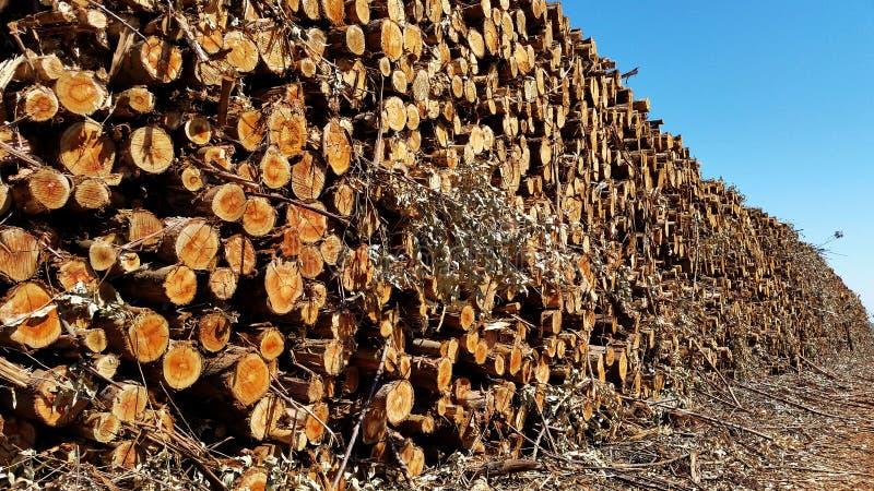 Gestapeld eucalyptushout stock afbeelding