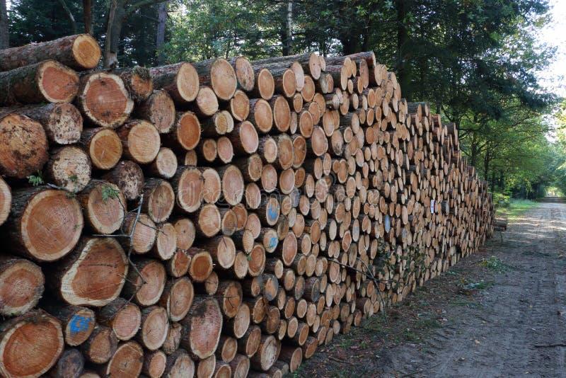 Gestapelde bomen in het bos royalty-vrije stock fotografie