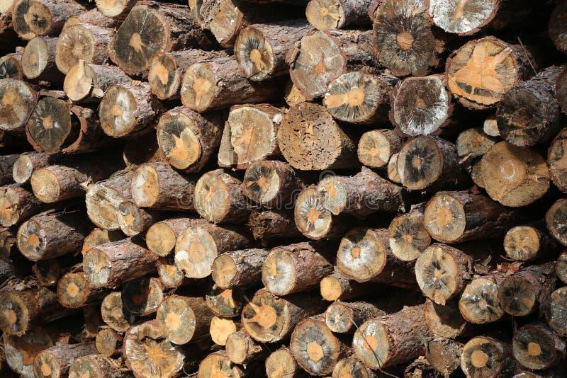 Gestapelde boom houten logboeken bij een pijnboombos royalty-vrije stock fotografie