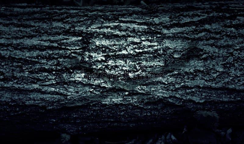 Gestapelde Houten logboeken stock fotografie