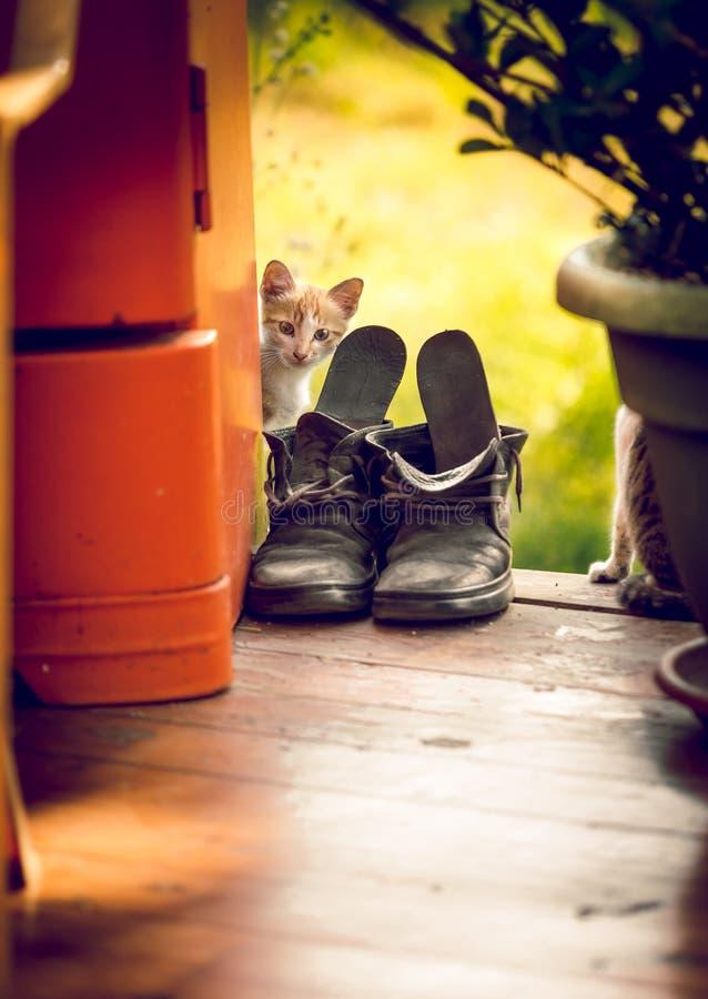 Gestemd schot van leuk wit katje die uit de oude oude schoen kijken stock afbeelding