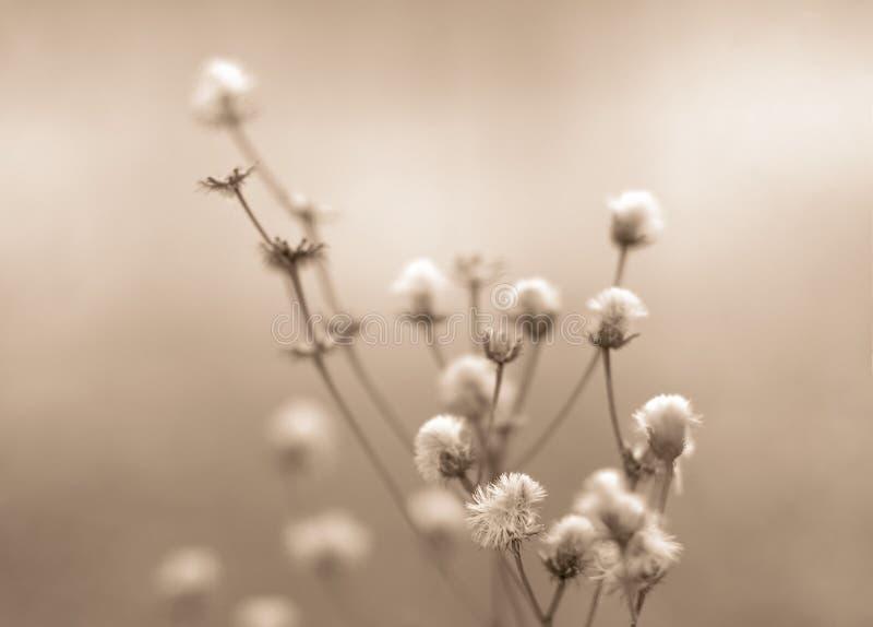 Gestemde de bloemen van de winter stock afbeelding