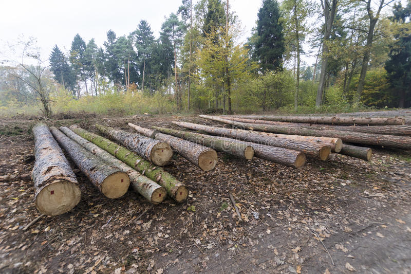 Gestión forestal imagen de archivo