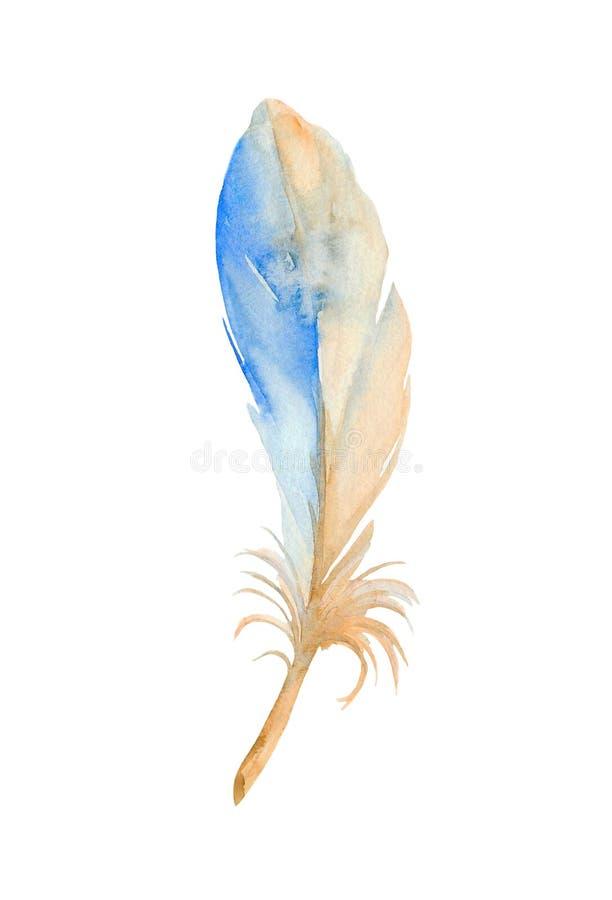 Gestileerde blauwe veer van gemeenschappelijke ijsvogel De illustratie van de waterverf vector illustratie