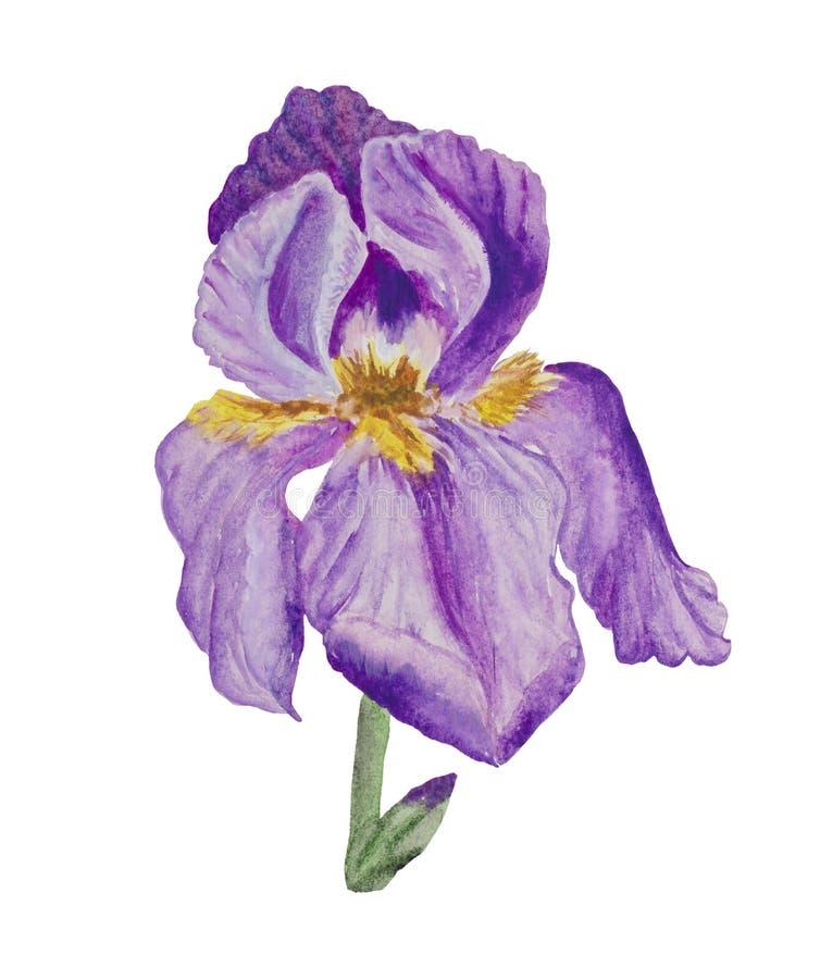 Gestileerde bloeiende Iris in close-up vector illustratie