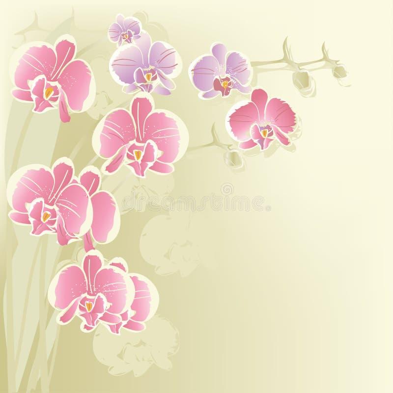 Gestileerde orchidee vector illustratie