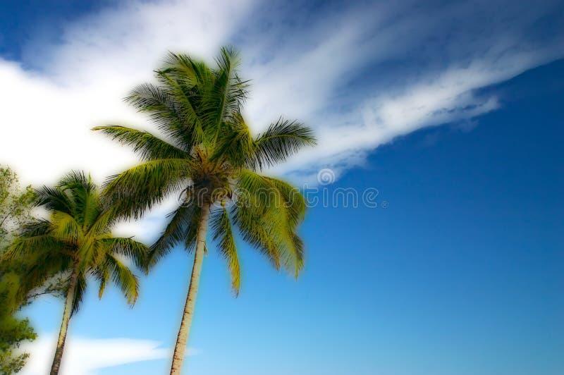 Gestileerde Twee Palmen en een blauwe hemel royalty-vrije stock foto's
