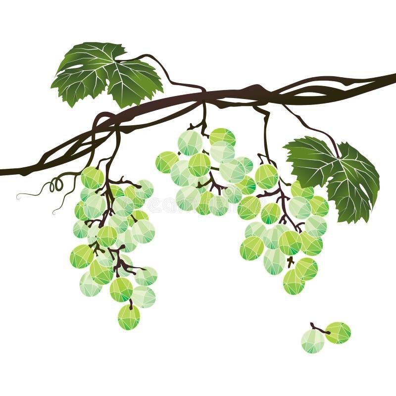 Gestileerde veelhoekige tak van groene druiven royalty-vrije illustratie