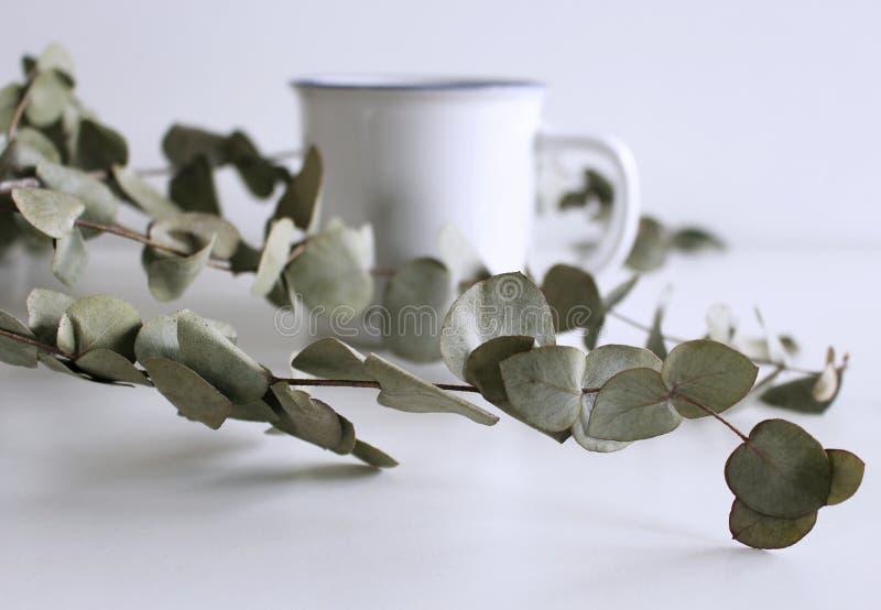 Gestileerde voorraadfoto De vrouwelijke scène van het Desktopmodel met groene eucalyptusbladeren en vage witte mok op witte achte royalty-vrije stock afbeelding