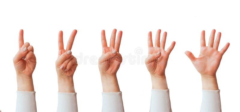 Gestos de mão caucasianos fêmeas múltiplos isolados sobre o fundo branco imagem de stock royalty free