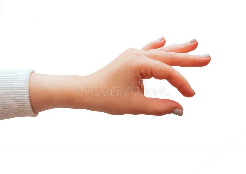 Gestos de mano caucásicos femeninos múltiples aislados sobre el fondo blanco imágenes de archivo libres de regalías