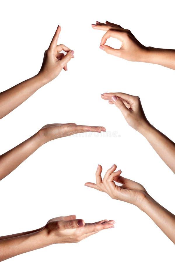 Gestos de mano femeninos múltiples aislados sobre el fondo blanco, sistema de imágenes múltiples imágenes de archivo libres de regalías
