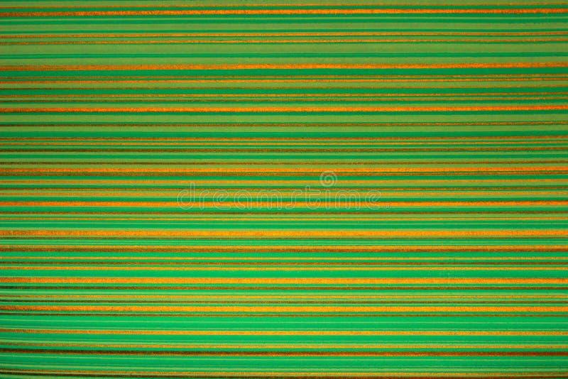 Gestreept behang Heldergroene achtergrond in een horizontale verdonkerde band van goud, vignet Textuur van de Grunge de lichtgroe stock foto