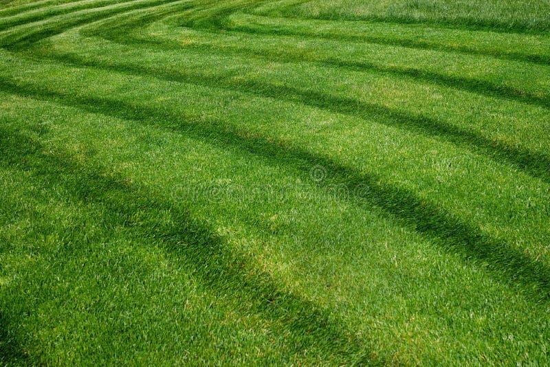 Gestreept patroon op een vers gesneden grasgebied royalty-vrije stock afbeeldingen