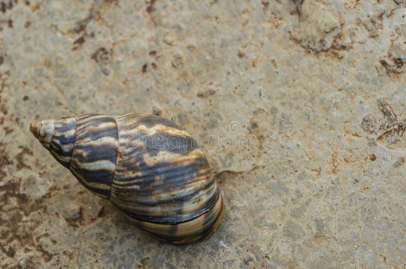 Gestreept Shell VAN een Slak stock foto's