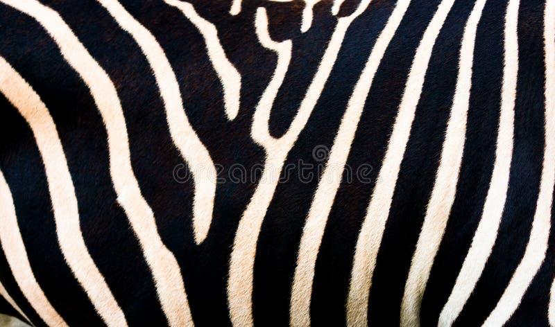 Gestreepte achtergrond, zwart-witte strepen Patroon van gestreepte huid, close-up stock illustratie