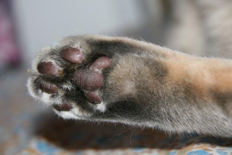 Gestreepte kat cat& x27; s poot stock afbeeldingen