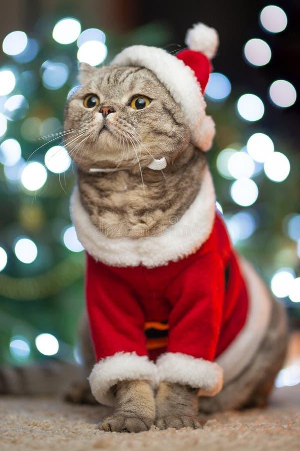 Gestreepte kat en de gelukkige kat Kerstmisseizoen 2019, nieuw jaar, vakantie en vakantie stock foto