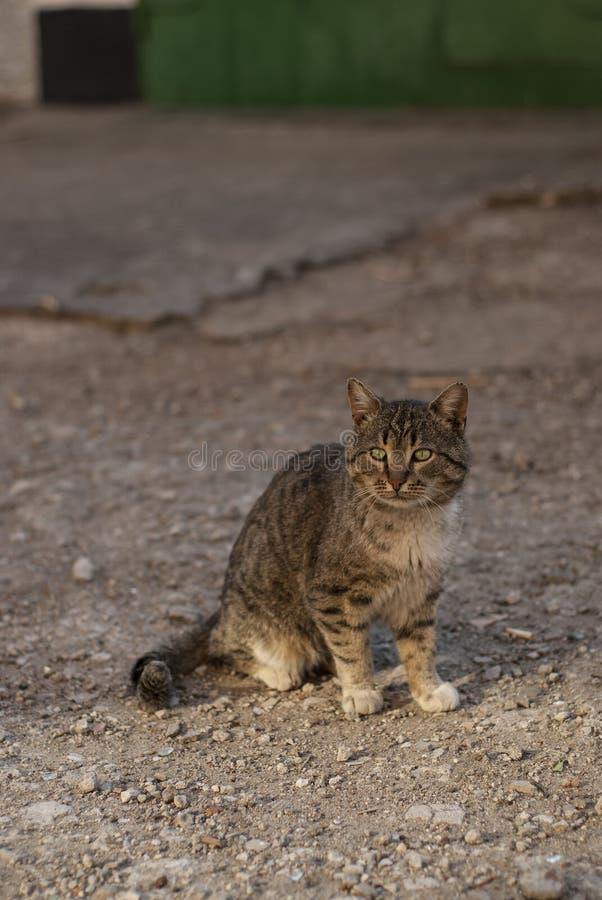 Gestreepte kat met groene ogen stock afbeeldingen
