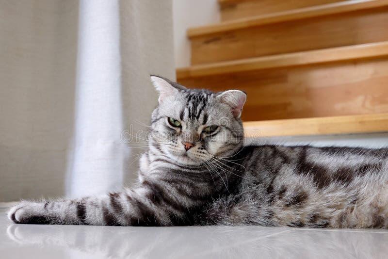 Gestreepte kat van het de pothuisdier van het katten de dierlijke leuke katje royalty-vrije stock fotografie