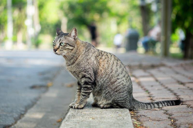 Gestreepte katkat die iets op gras in de tuin kijken stock afbeelding
