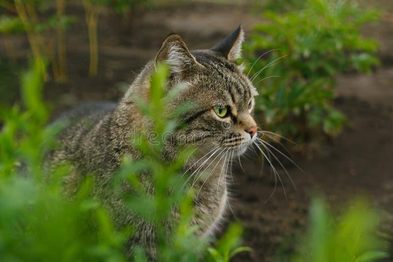 Gestreepte katkat in het gras stock fotografie