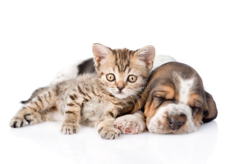 Gestreepte katkatje en slaapbasset hondenpuppy die samen liggen Geïsoleerde royalty-vrije stock foto