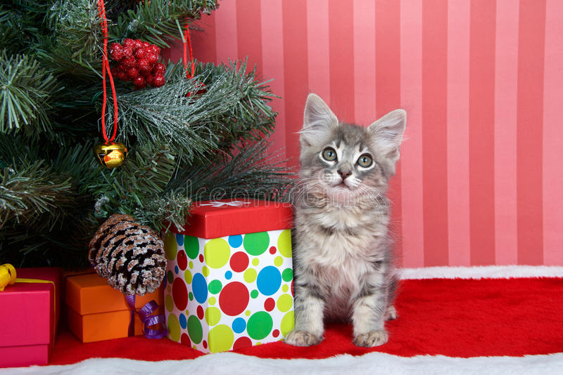 Gestreepte katkatje onder Kerstmisboom royalty-vrije stock afbeeldingen