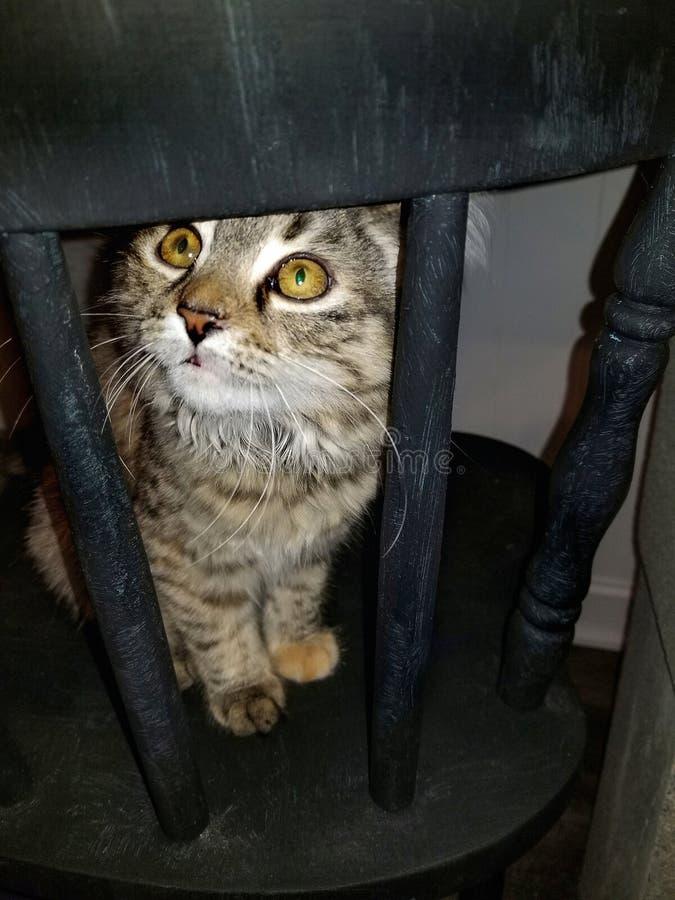 Gestreepte katkatje op zwarte stoel stock foto's