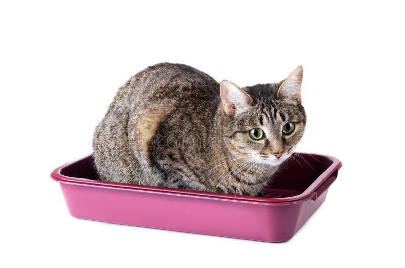 Gestreepte kattenzitting in kattentoilet stock fotografie